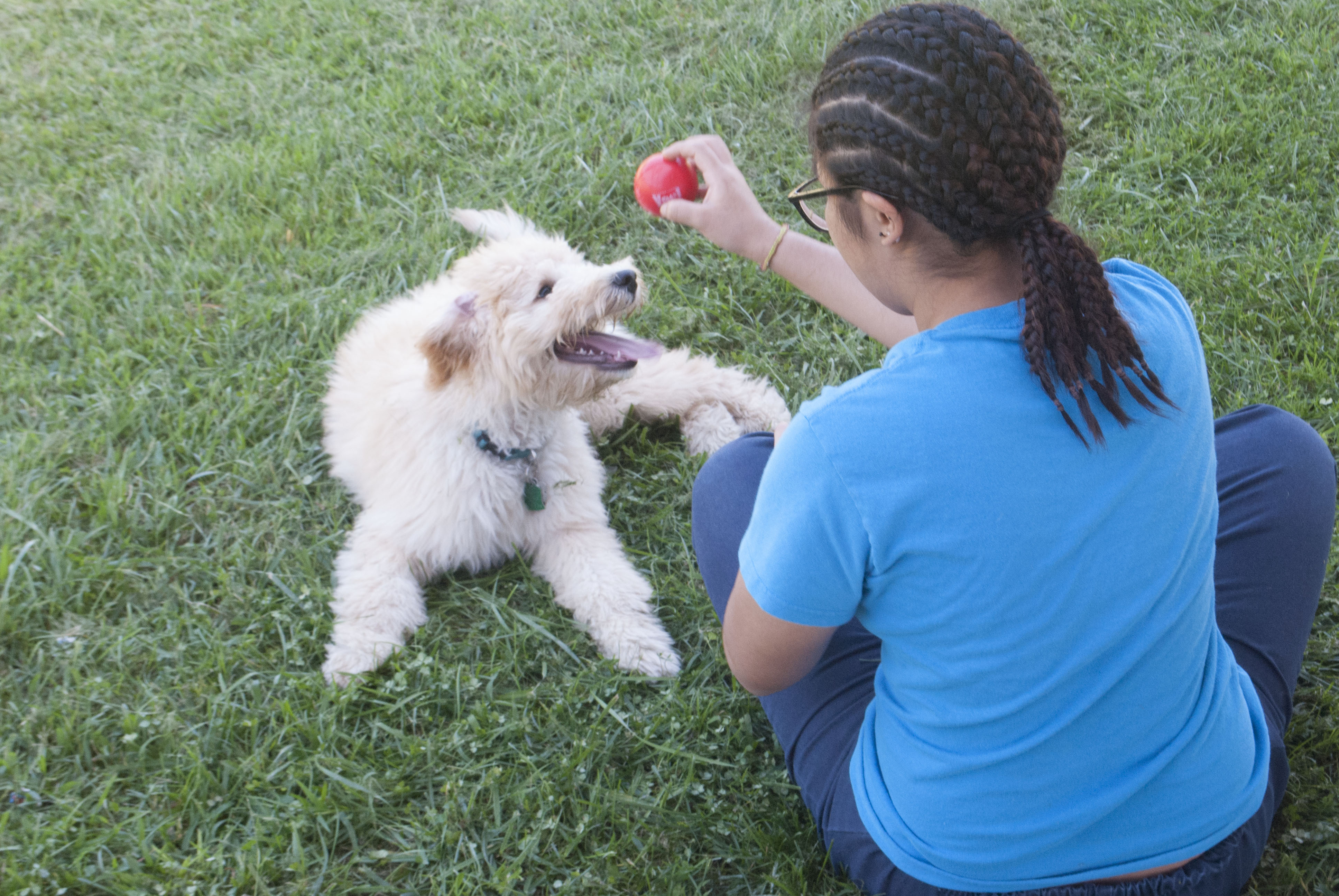Clay, a 20-month-old Miniature Goldendoodle, at Waxter Children's Center in Laurel, Maryland, with a resident of the juvenile facility. That puppy, and another at a boys' facility in Hagerstown, help the teens deal with stress and other issues. Capital News Service photo by Hannah Gaskill.