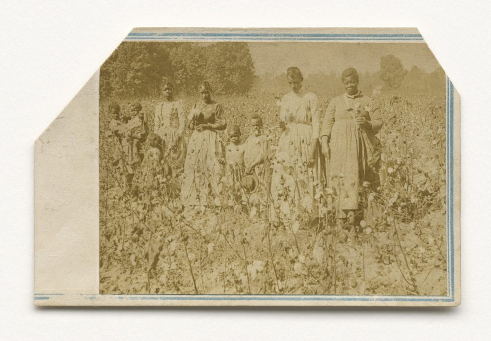 Photograph of women and children standing in a cotton field in the 1860s.